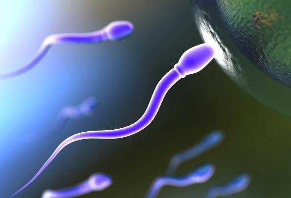 visokiy-ph-spermi